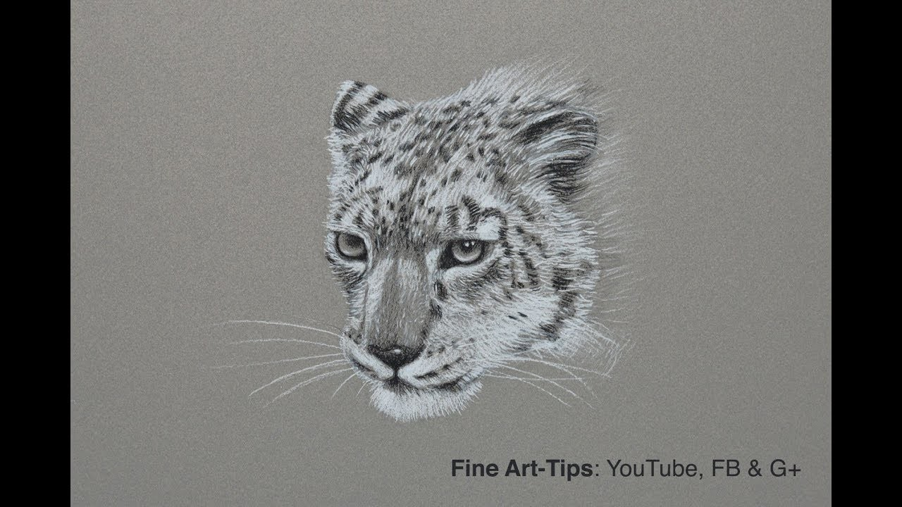 How to Draw a Snow Leopard - Narrated