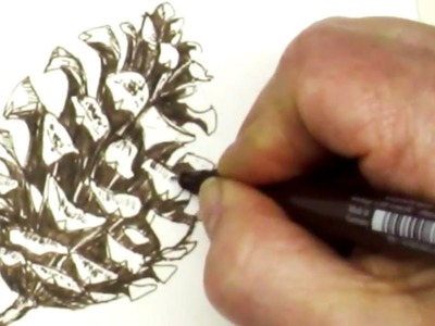 Fun and Easy How to Draw a Pinecone with a Pen