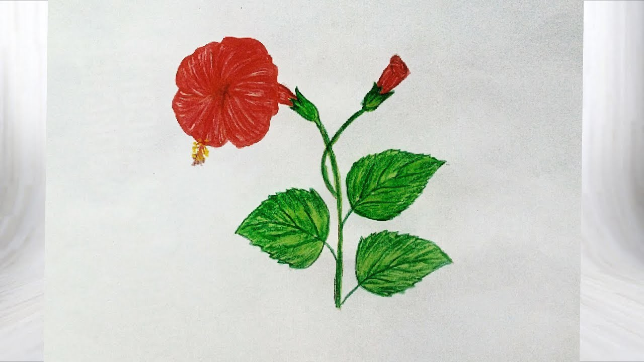 How To Draw Hibiscus Flower Easy And Simple Way