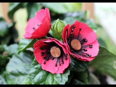 How to make paper Poppies by Archana Joshi ( Follow The Flower Friday)