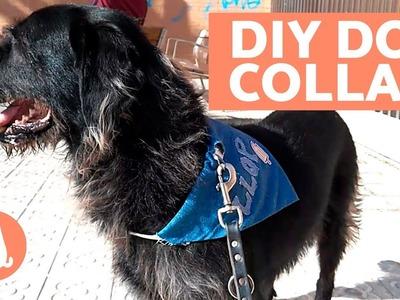 DIY Dog Collar - Easy Crafts