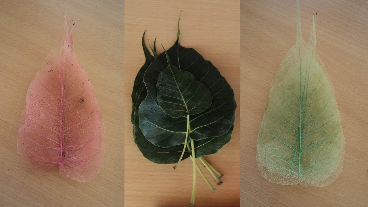 DIY-Art Attack | Convert Direct Colored Skeleton Leaf.