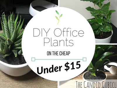 DIY Office Plants: On the Cheap! Under $15