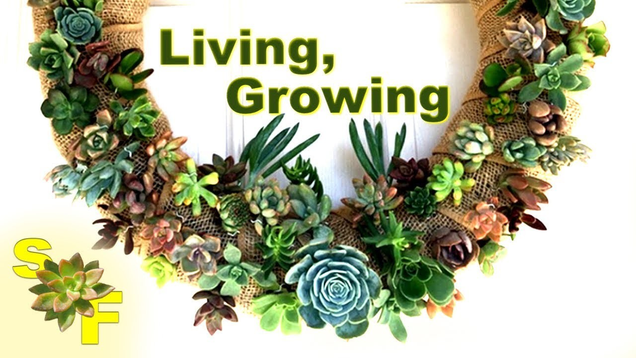How to Make a Succulent Wreath Arrangement (Tutorial and Helpful Tips)