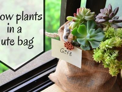 Growing Succulents in a Jute bag|  Unique Gift Idea | DIY. Garden Up