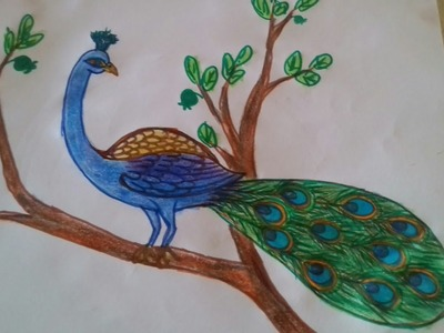 How to draw a beautiful peacock