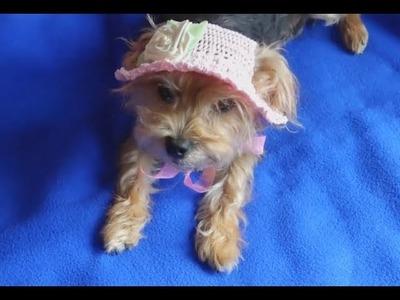 Gorro sombrero de verano para perro.how to make a sammer dog hat