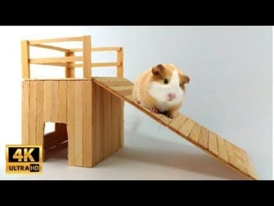 HOW TO MAKE HAMSTER HOUSE