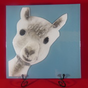 Llama/Alpaca made with fused glass,wood frame, Handmade. MADE TO ORDER
