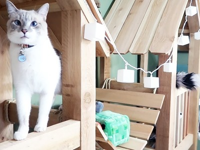 Building a Clubhouse for My Cat