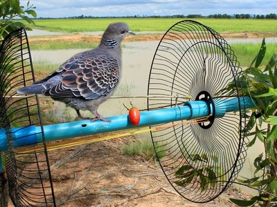 Awesome Super Bird Trap Using Fan Guard With PVC - How to make super easy bird trap work 100%