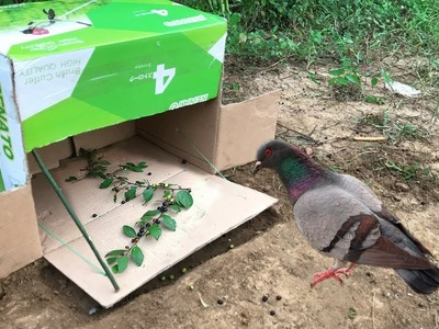 Wow Bird Trap Using Paper Box - Simple Bird Trap In My Village