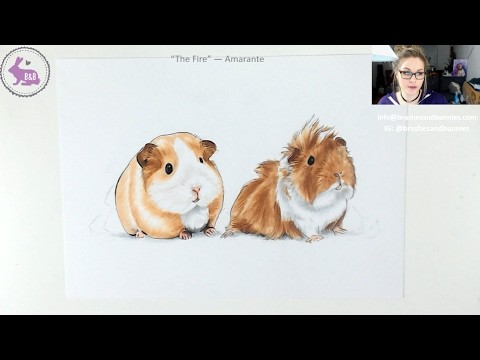 How to draw a guinea pig - LIVE Art Lesson