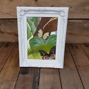 handcrafted white ornate coffee coloured framed butterfly picture with jungle background