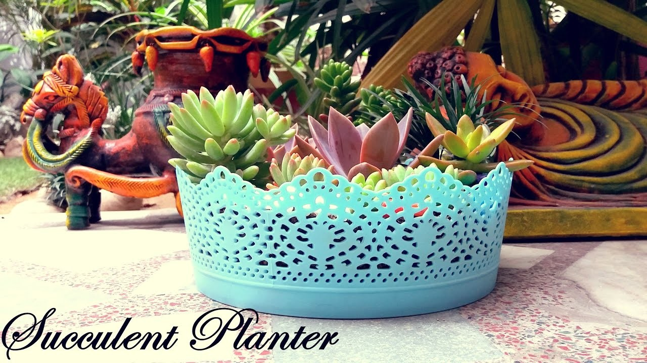 Make a Beautiful Succulent Planter in 5 Minutes