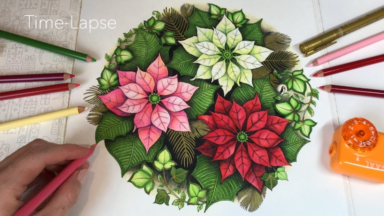time lapse poinsettias johannas christmas coloring book