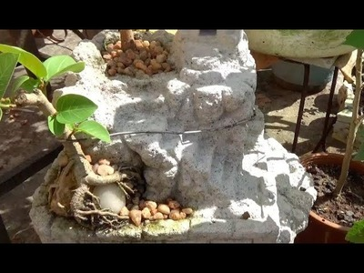 Bonsai tree planting in Ancient Temple type treepot (with English subtitle)
