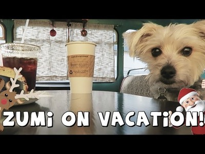 DCTC Amy Jo and Zumi Vlog | The Biltmore Estate | Christmas Vacation