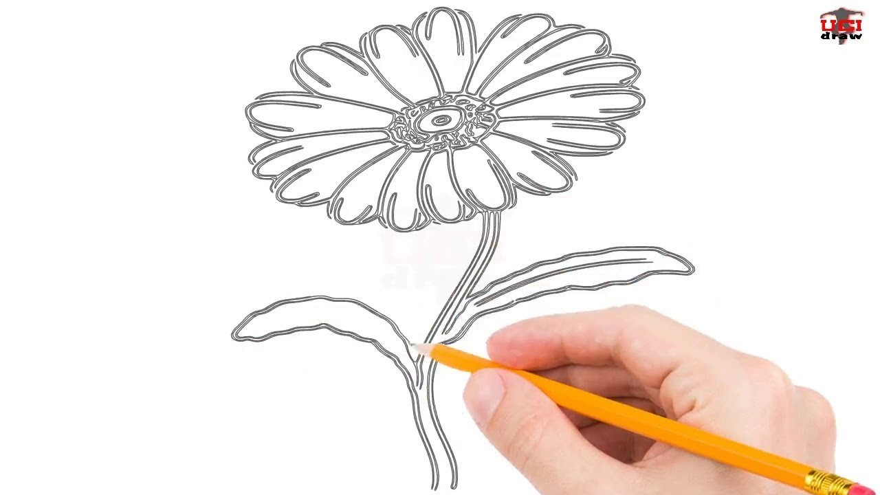 How to Draw a Daisy Step by Step Easy for Kids.Beginners – Simple Daisy Drawing Tutorial
