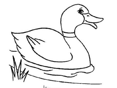 How To Draw Duck For Kids Very Easy Step By Step
