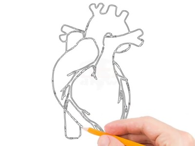 How To Draw Human Heart Step By Easy For Beginners