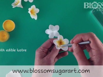 Making a frangipani. plumeria flower - Quick and Easy