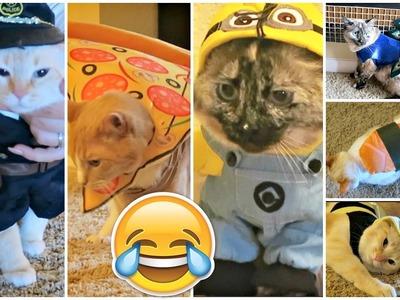 """CATS TRY ON PET HALLOWEEN COSTUMES! Halloween """"Lookbook"""""""