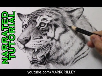 How to Draw a Tiger [Narrated Step-by-Step Tutorial]