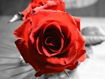 How to make a beautiful and amazing red rose with crepe paper!