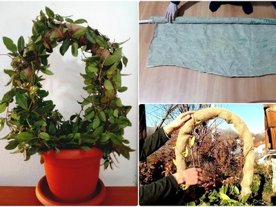 How to make Hoya houseplant Wreath very easy