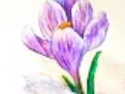 Crocus flower in snow watercolor tutorial, easy step by step for beginners