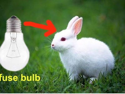 How to make rabbit with cotton using bulb.gk craft
