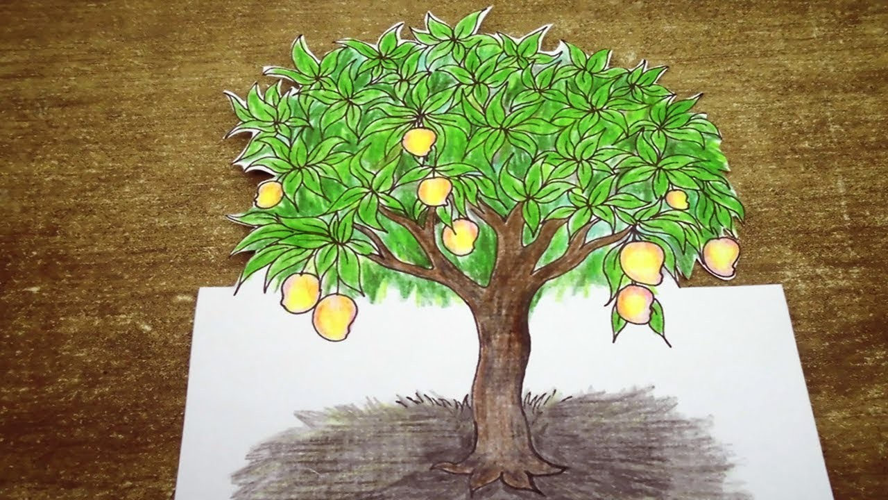 Mango Tree Drawing Pictures Bestchristmasdeals Org