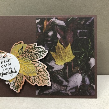 """Thanks"" Brown Color Leaves Scene"