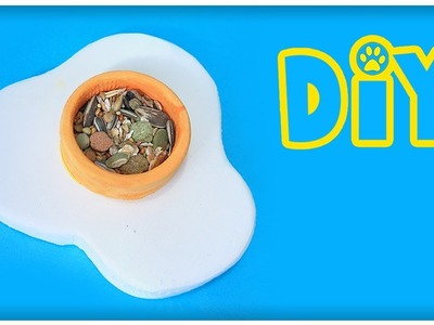 DIY Fried Egg Bowl For Small Pets