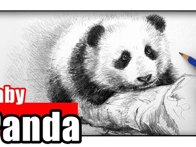 How to Draw a Panda the Easy Way