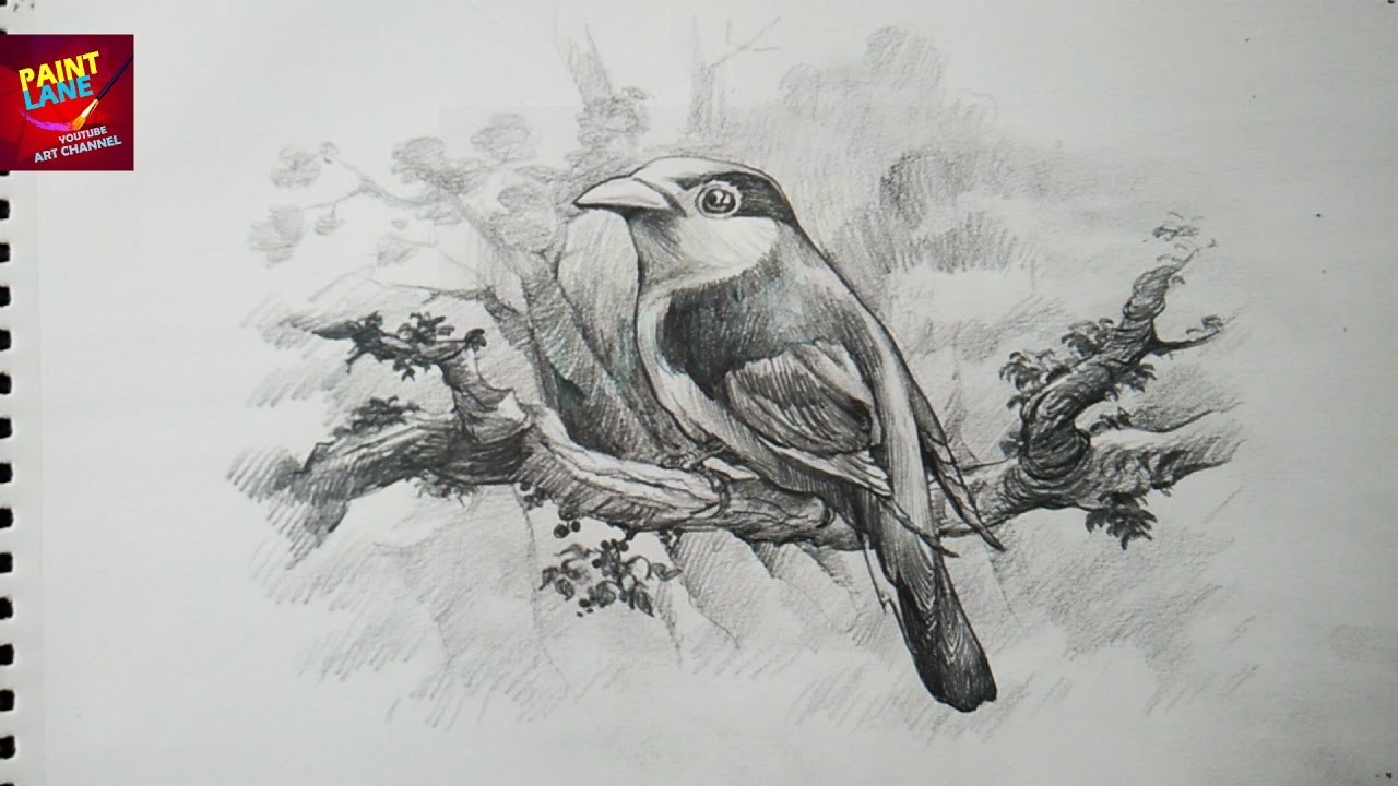 How To Draw A  Bird With Pencil |  Drawing | Shading