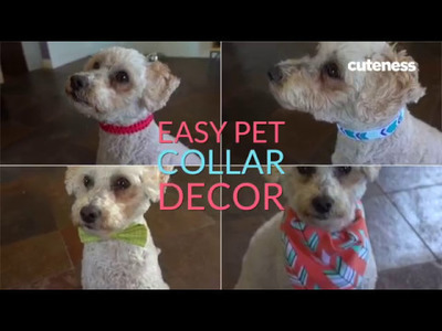 3 Truly Easy Ways To Jazz Up A Pet Collar
