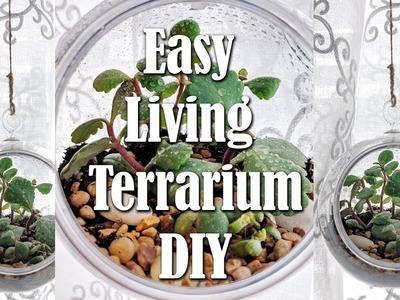 Dollar Tree Hanging Terrarium with Living Succulents DIY Easy Living Home Decor