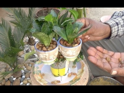 Reusing Ceramic cup as tree pot (with english subtitle)