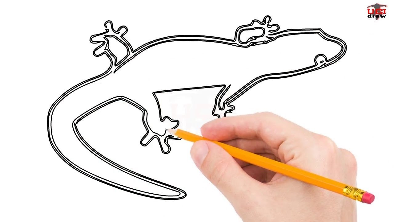 How To Draw A Lizard Step By Step Easy For Beginners Kids Simple