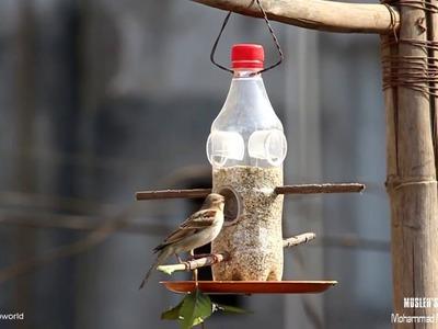 DIY:Bird Feeder.
