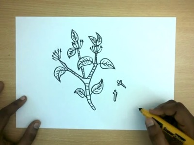 How to Draw a Cloves | Easy Step by step drawing for kids