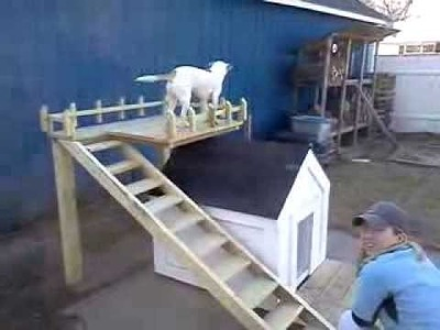 Dog House Double Deck