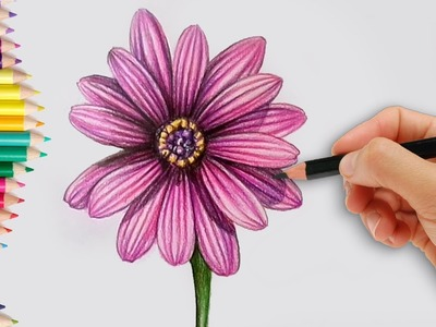 How to Draw a Realistic Dahlia Flower Step by Step How to do Pencil Shading