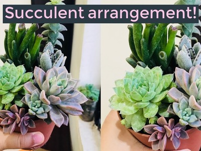 DIY simple and easy succulent arrangement || INDIAN succulent collector ||