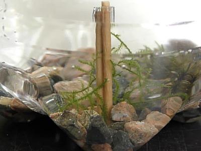 Driftwood Toothpicks for Aquarium DIY