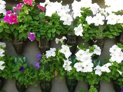 Floriculture on wall using plastic bottles (with english subtitle)