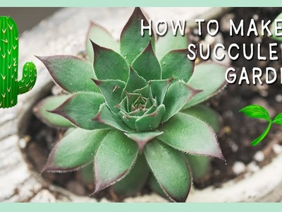 Succulent Tips for Beginners   How to Repot Succulents   Learn to Garden   How to Grow Succulents