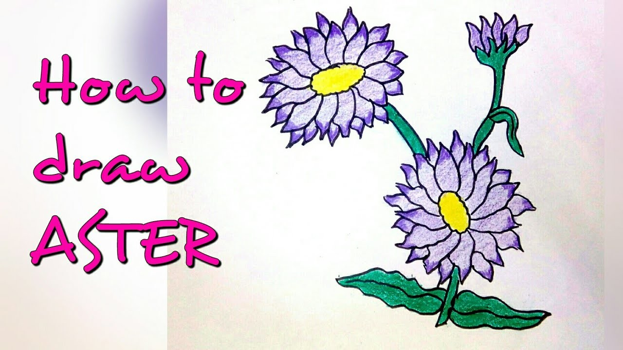Drawing tutorial : how to draw aster flower   step by step   easy drawing [creative ideas]